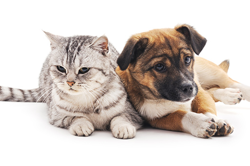 Quantock Veterinary Hospital autumn worming offer for cats and dogs