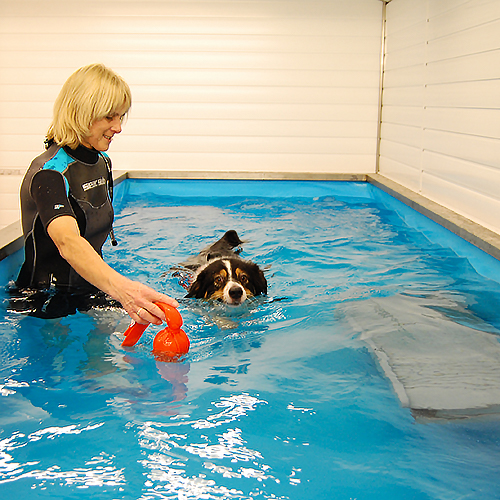 Pet Hydrotherapy and Quantock Vet Hospital
