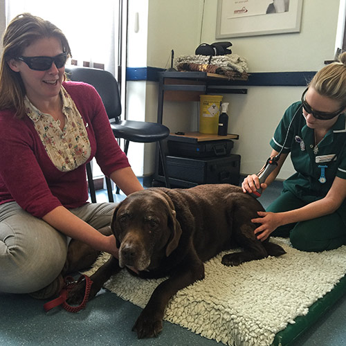 Laser Therapy for you pet at Quantock Vet Hospital