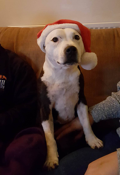 Cassie - December pet of the month