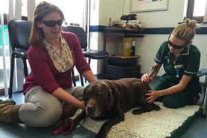 Laser Therapy for you pet at Qu
