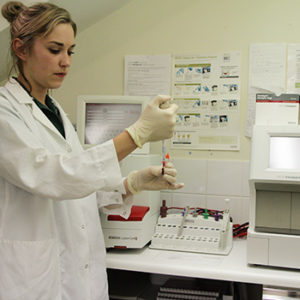 Diagnostic laboratory tests at Quantock Vet Hospital