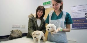 Our Pet Healthcare Services