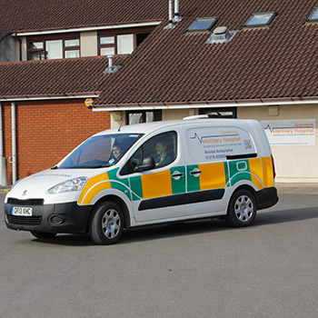 Pet emergency services at Quantock Vet Hospital