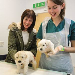 breeding support at quantock vet hospital