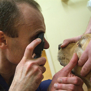 Eye scoring for pets at quantock vet hospital