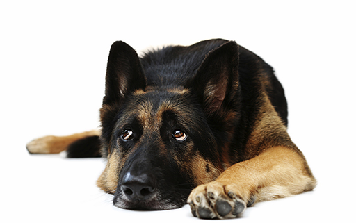 Osteoarthritis in dogs and cats – there's a lot we can do to help