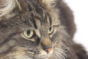 November is Diabetes month for cats and dogs