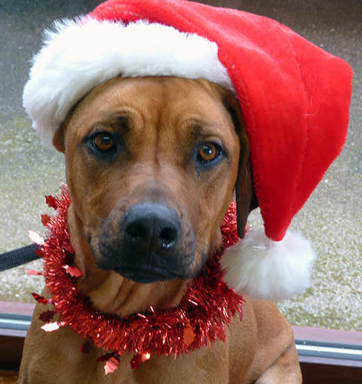 Quantock Vets open for emergencies over Christmas