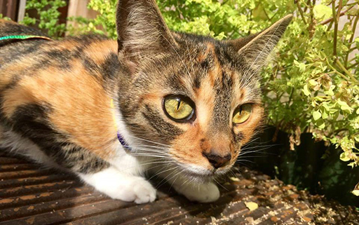 Poppy and her special diet – November's Pet of the Month!