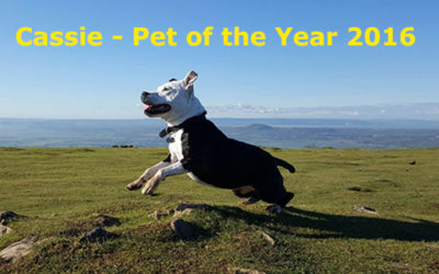 Brave Cassie wins Pet of the Year 2016!
