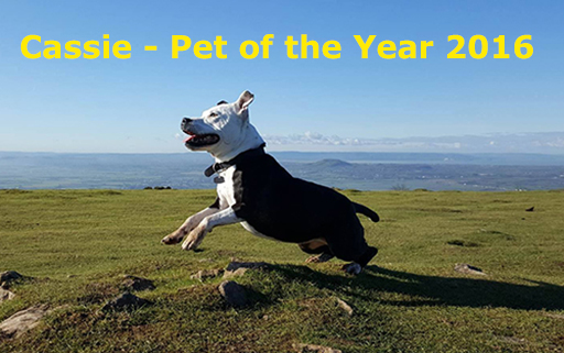 Cassie - 2016 Pet of the Year