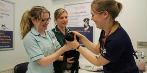 Vet Jobs at Quantock Vet Hospital