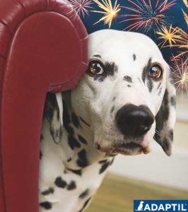 Dogs can be very scared by fireworks