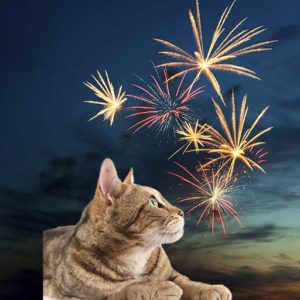Cats can be very scared by fireworks