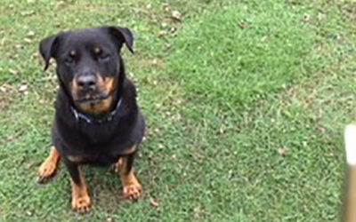 Lucky Lottie the Rottie