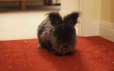 Angoran rabbit Mollie wins Pet of the Month for February!