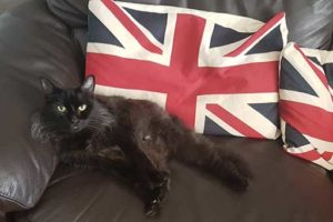 Nicholas the cat - Quantock Pet of the Month