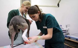 Veterinary Nurses at Quantock Veterinary Hospital