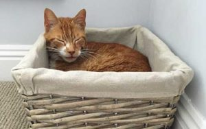 Pet of the Month cat Joseph fighting cancer