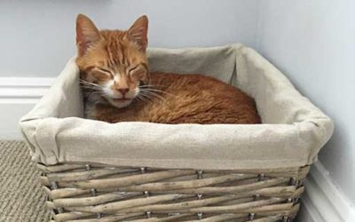 Joseph the cat – our determined Pet of the Month!