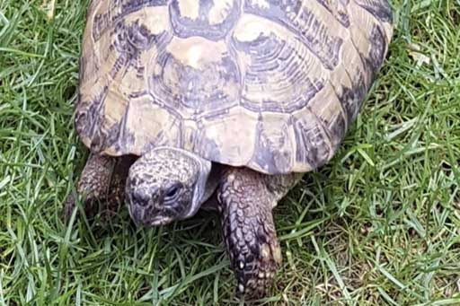 Toby the tortoise – Quantock Pet of the Month!
