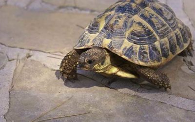An evening talk on tortoise hibernation