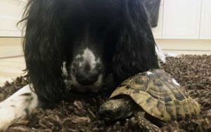 George the tortoise Pet of the Month
