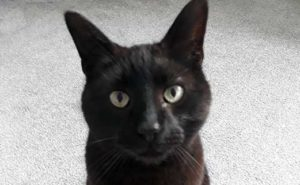 Mario the moggy Quantock Vets pet of the month