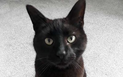 Congratulations long suffering moggy Mario our Pet of the Month!