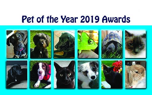 Pet of the Year 2019 winners chosen for Quantock Hospital