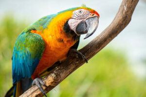 Macaw exotic vet treatment