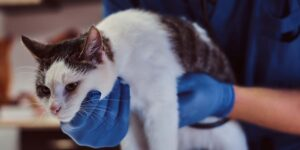 Sick cat at Somerset Veterinary Emergency Clinic