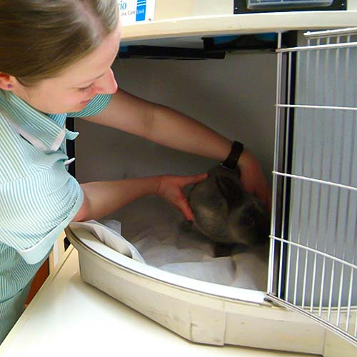Emergency critical care for pets in Somerset