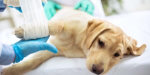 Sick dog at Somerset Veterinary Emergency Clinic